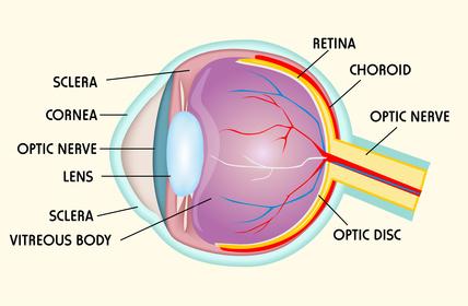 ¿Qué es la Retina?